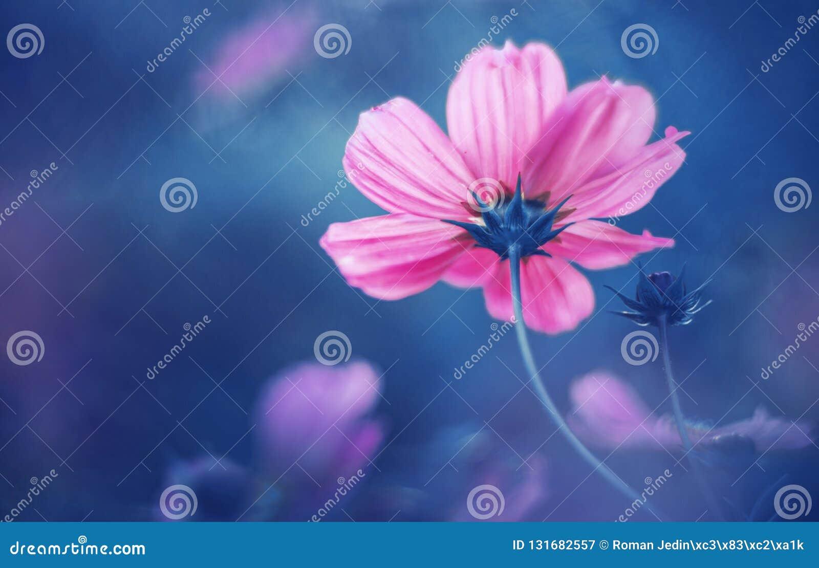 Sueño del rosa de la flor