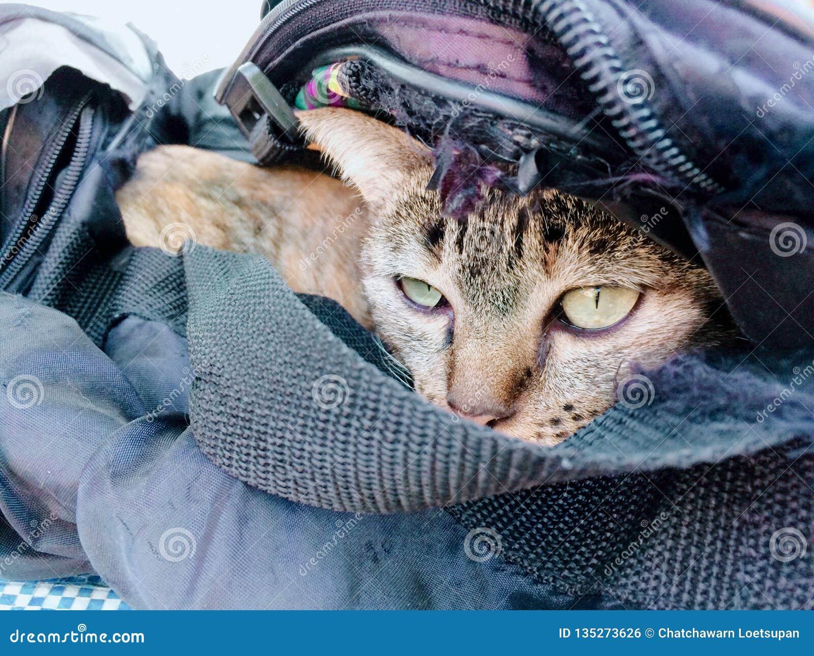 Sueño en el bolso