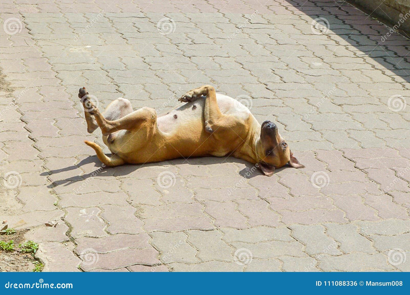 Sueño lindo del perro en piso del ladrillo