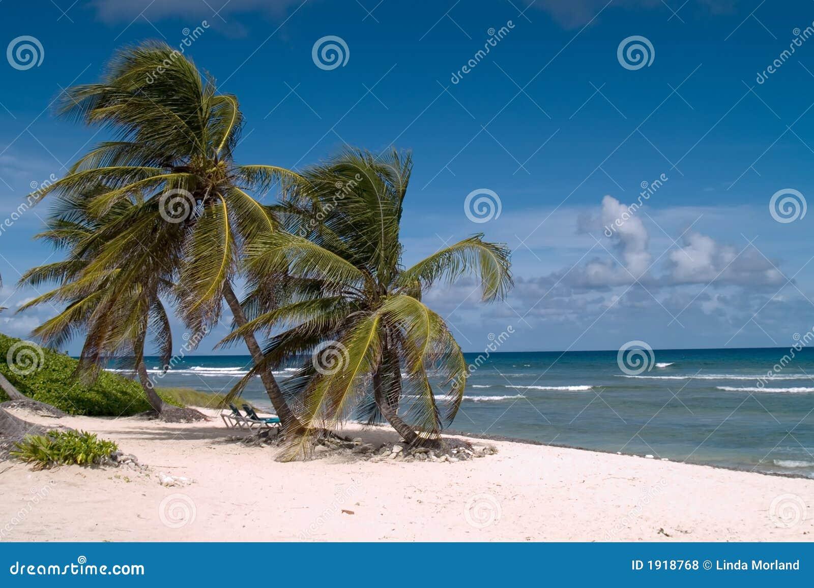 Sueños de la playa
