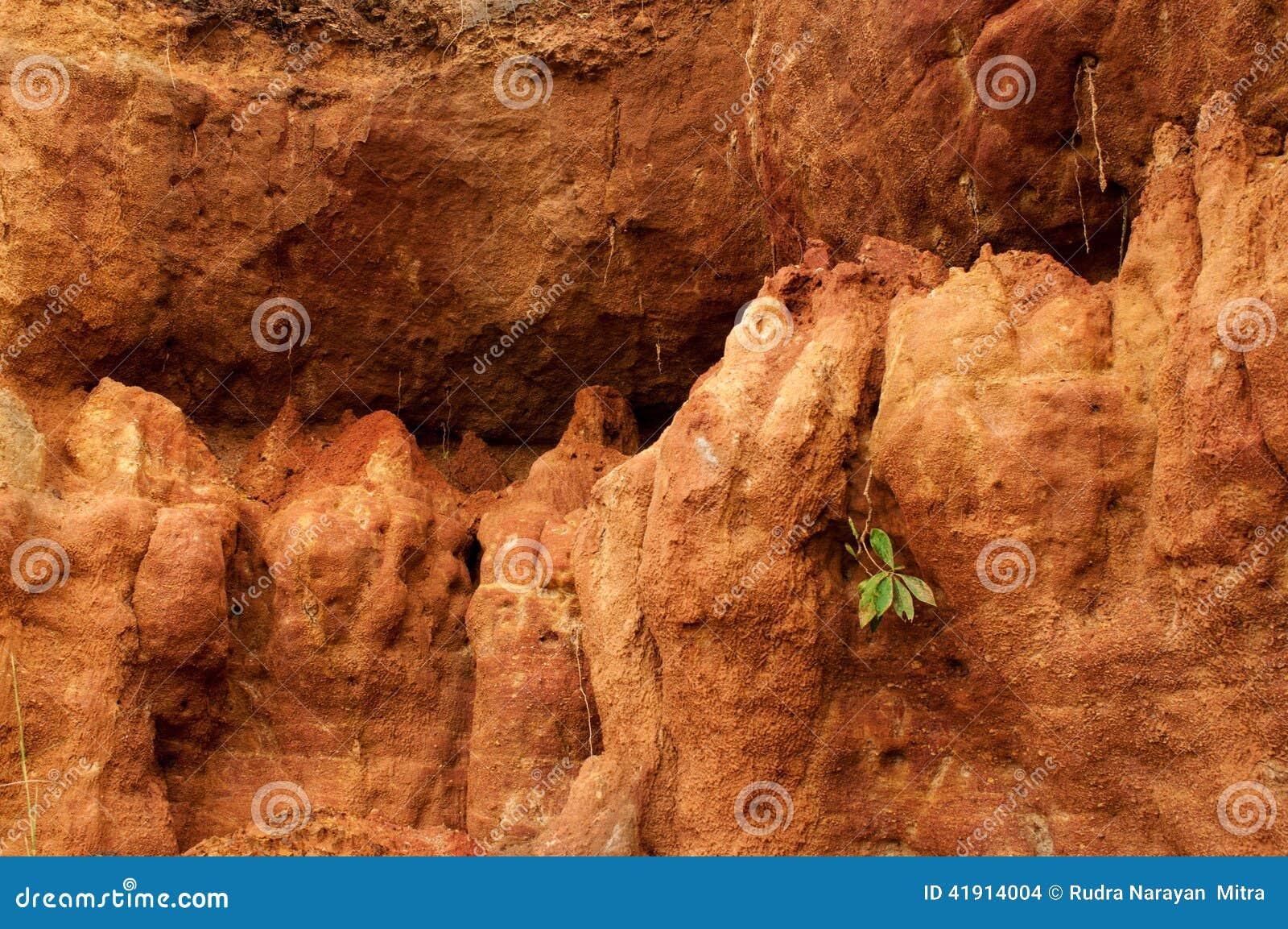 Suelo rojo del gongoni, Benga del oeste, la India