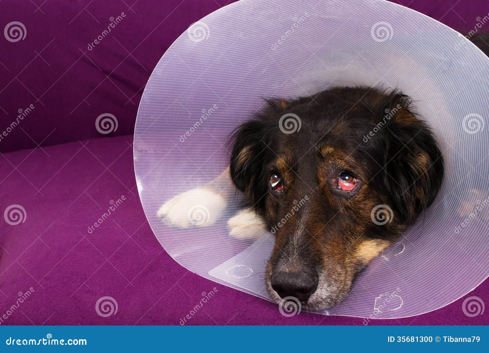 Suffering Dog Stock Photo Image 35681300