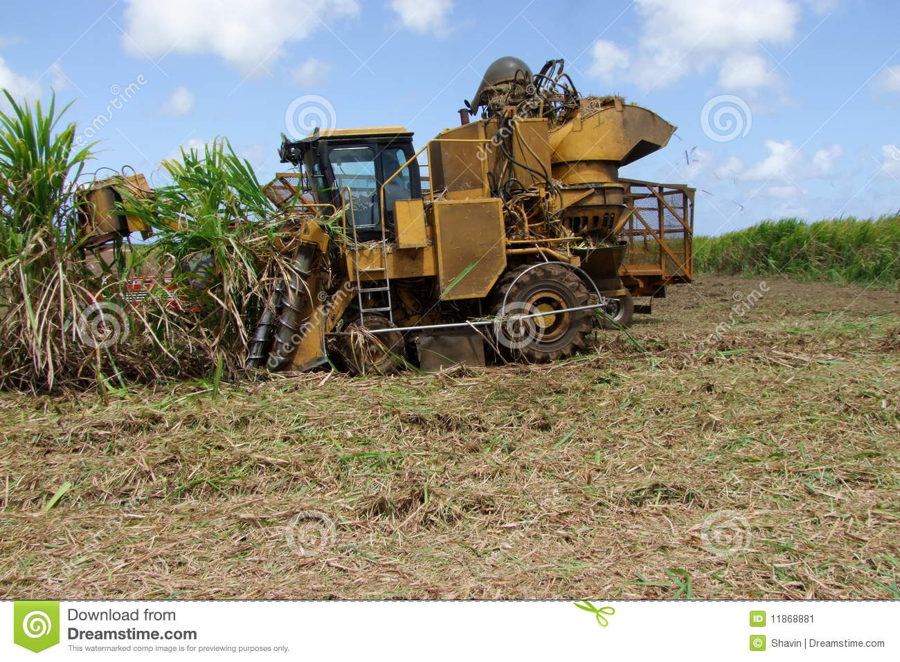 Sugar Cane Harvest by Machine