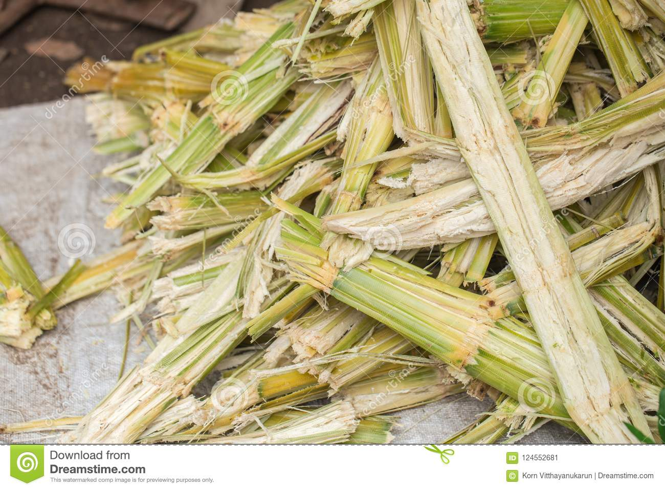 Sugar cane natural cellulose fibers and source of Ethanol biofuel