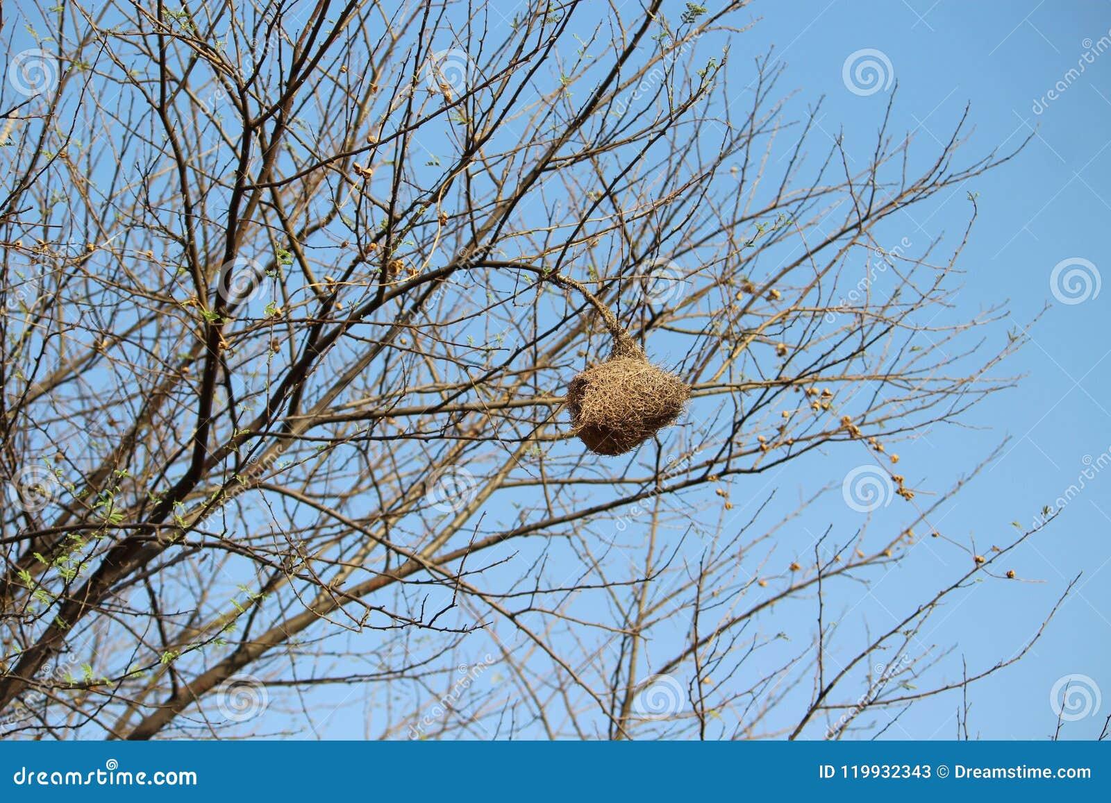 Marathi Name Sugaran Home Or Nest Stock Image Image Of Sugaran Name 119932343