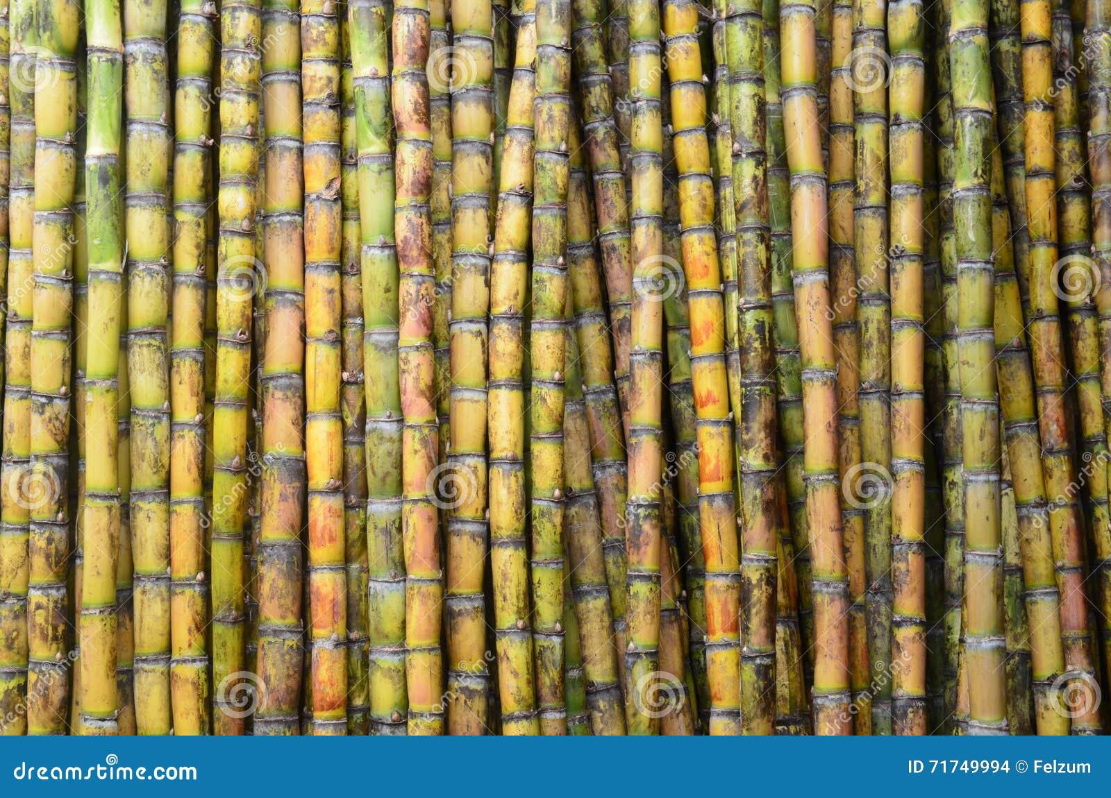 sugarcane stock photo image 71749994