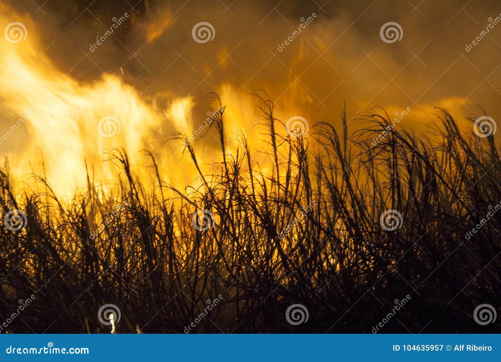Download Suikerrietbrand stock afbeelding. Afbeelding bestaande uit trilling - 104635957