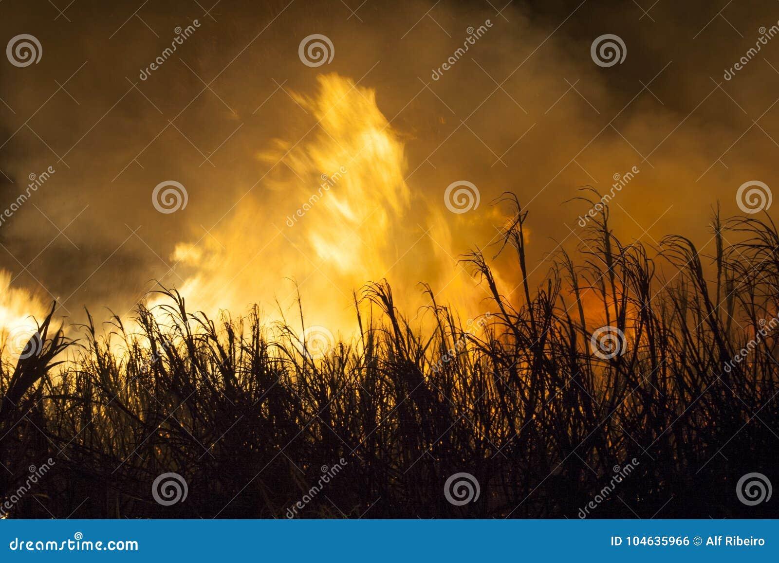 Download Suikerrietbrand stock foto. Afbeelding bestaande uit landbouwindustrie - 104635966