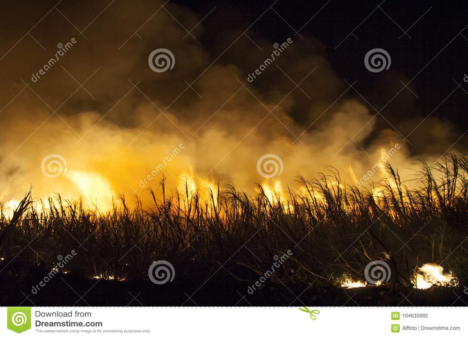 Download Suikerrietbrand stock foto. Afbeelding bestaande uit oogst - 104635992
