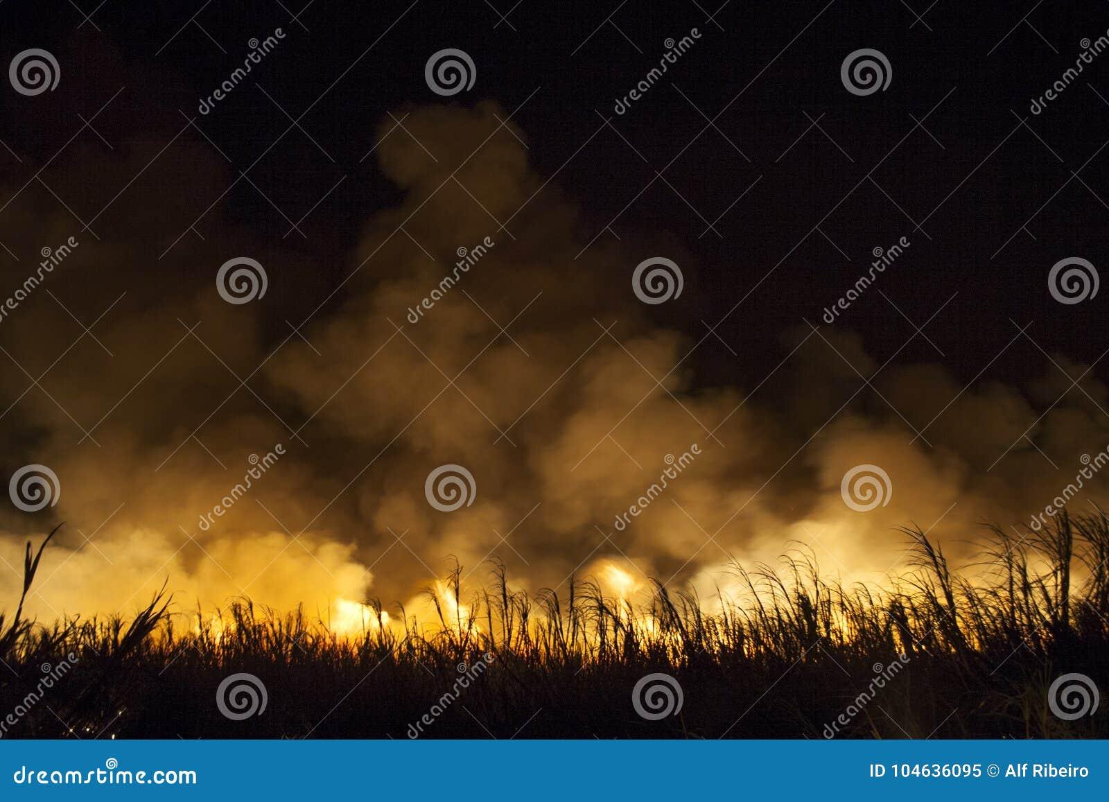 Download Suikerrietbrand stock afbeelding. Afbeelding bestaande uit vuurzee - 104636095