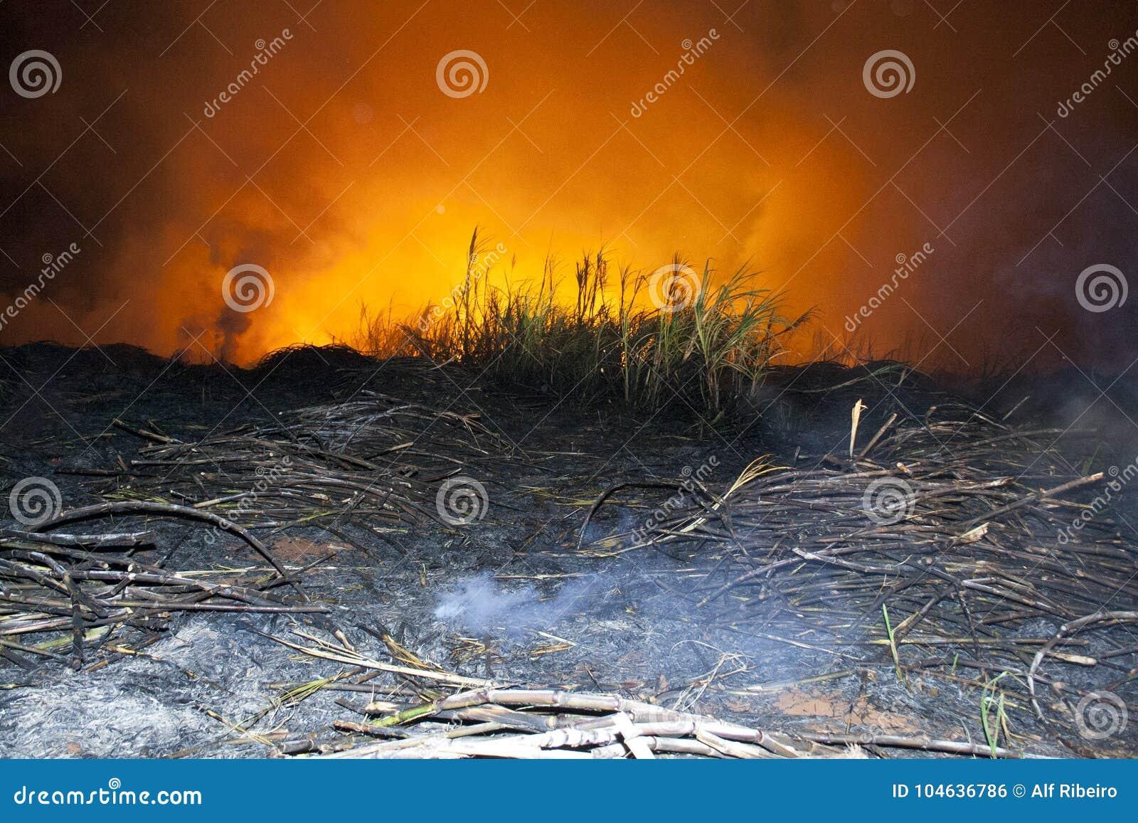 Download Suikerrietbrand stock foto. Afbeelding bestaande uit element - 104636786
