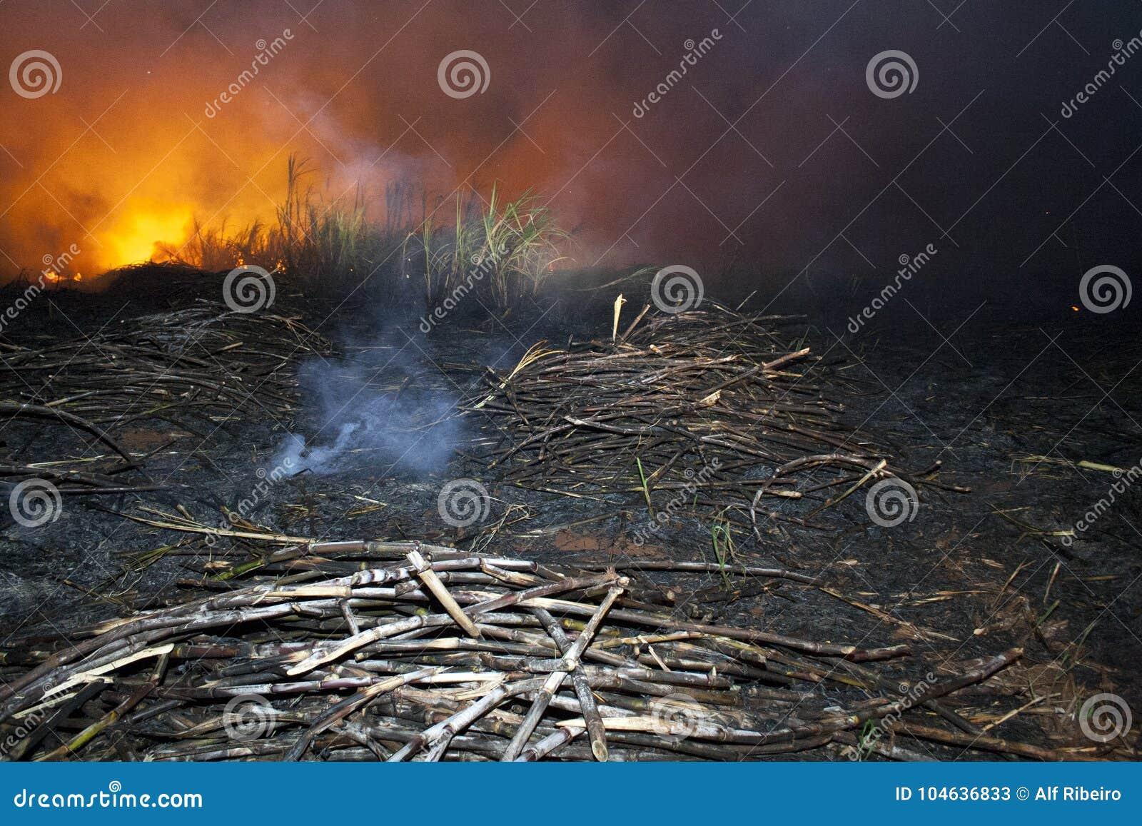 Download Suikerrietbrand stock afbeelding. Afbeelding bestaande uit brand - 104636833