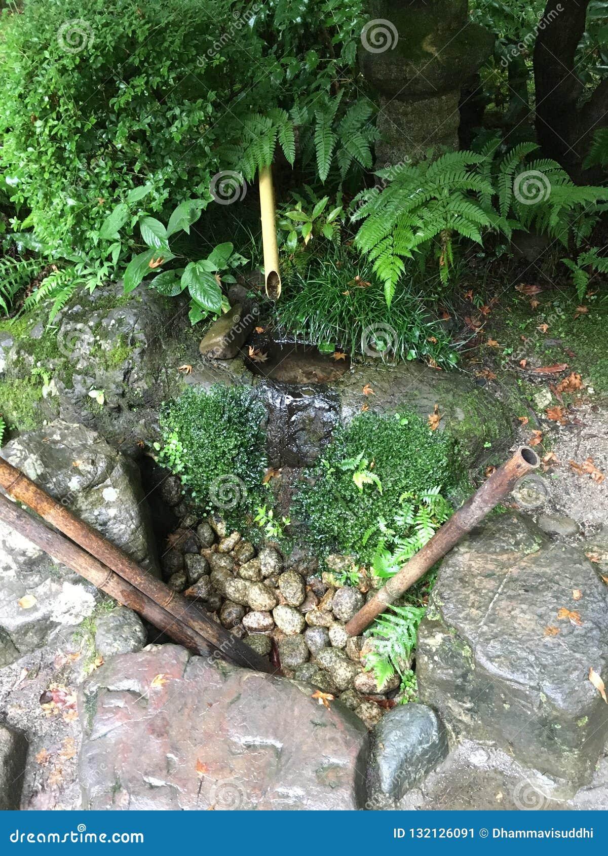Suikinkutsu, ou 'caverna do koto da água ', no jardim botânico de Kyoto no verão