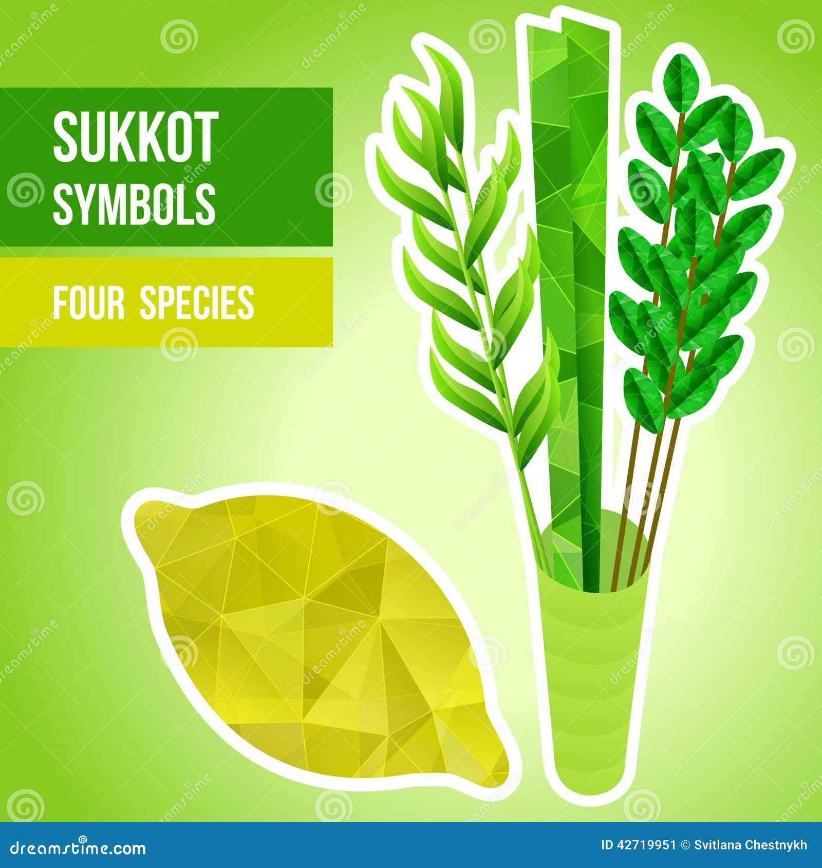 Sukkot symbols stock image image of bunch myrtle feast 42719951 sukkot symbols biocorpaavc