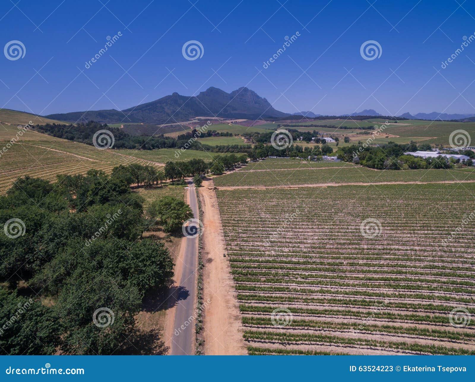 Sul - vinhedos africanos
