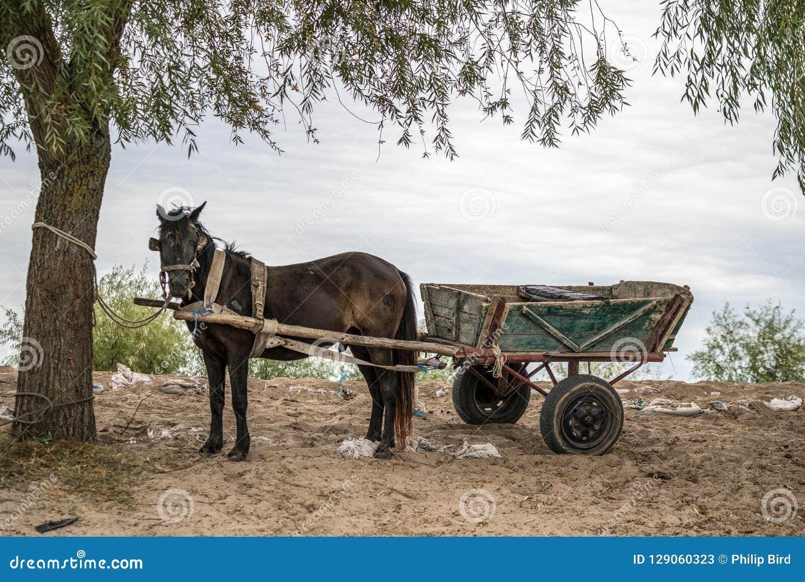 SULINA, DANUBE DELTA/ROMANIA - SEPTEMBER 23 : Horse and cart in