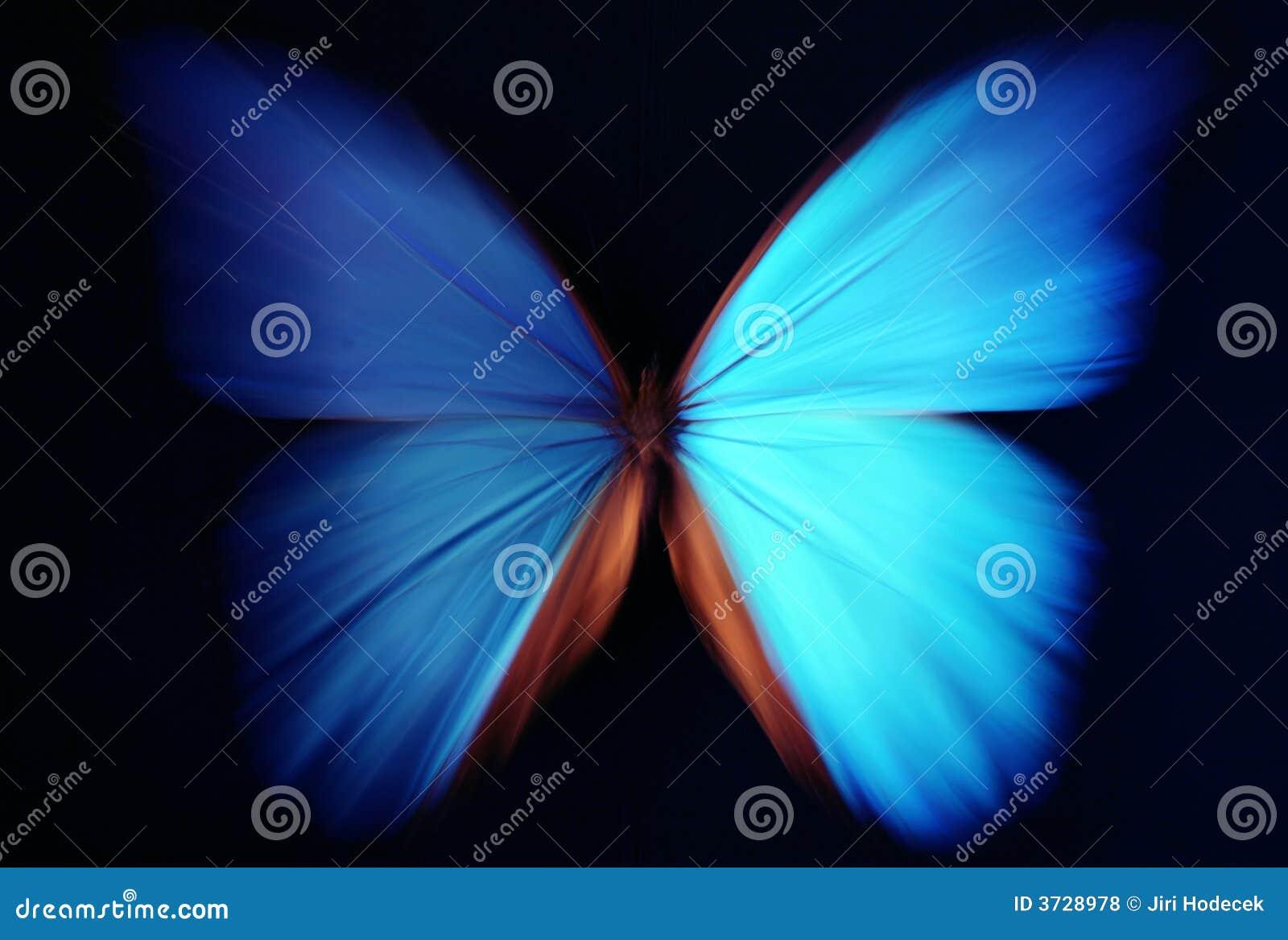 Sumário azul da borboleta com zoom