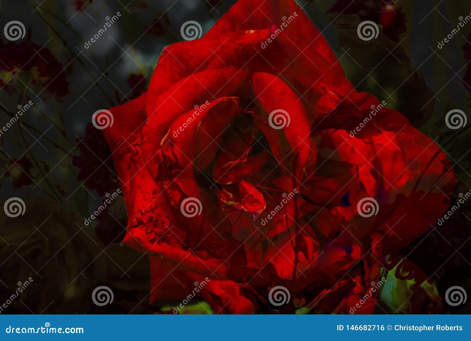 Sumário Rose Flower Patterns com cores vibrantes
