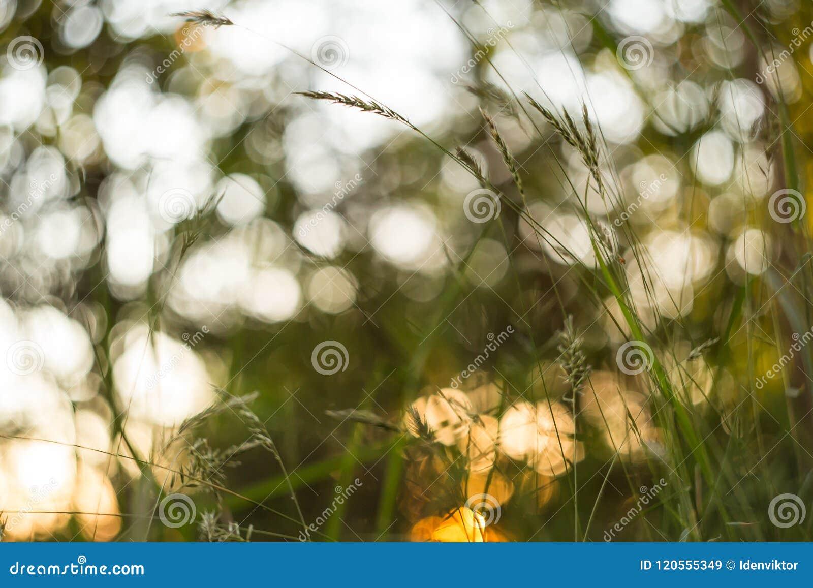 Sumário verde e amarelo fundo borrado da natureza Macro, borrão, bokeh