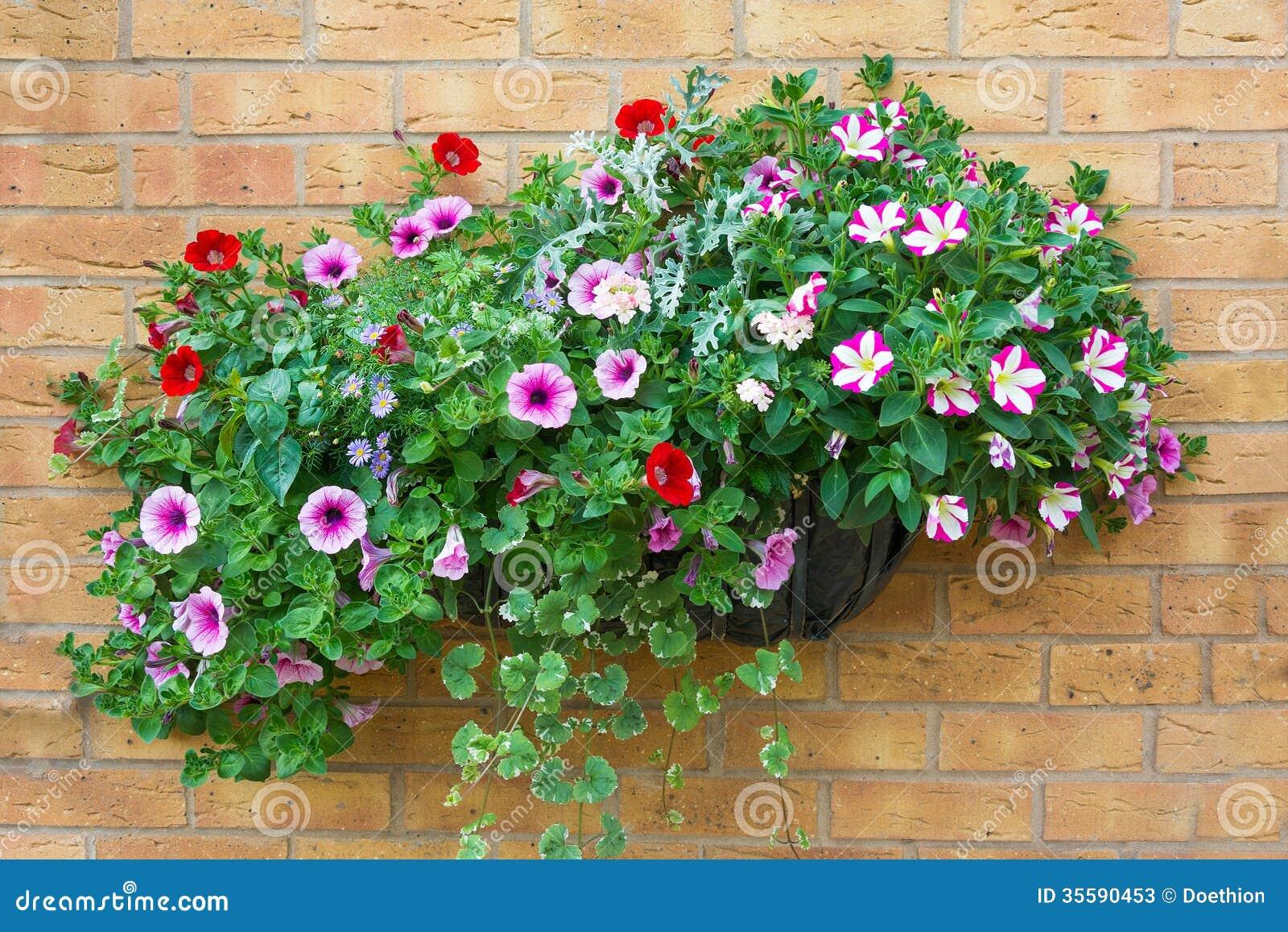 Wall Mount Flower Basket : Summer bedding flowers in a wall mounted basket stock