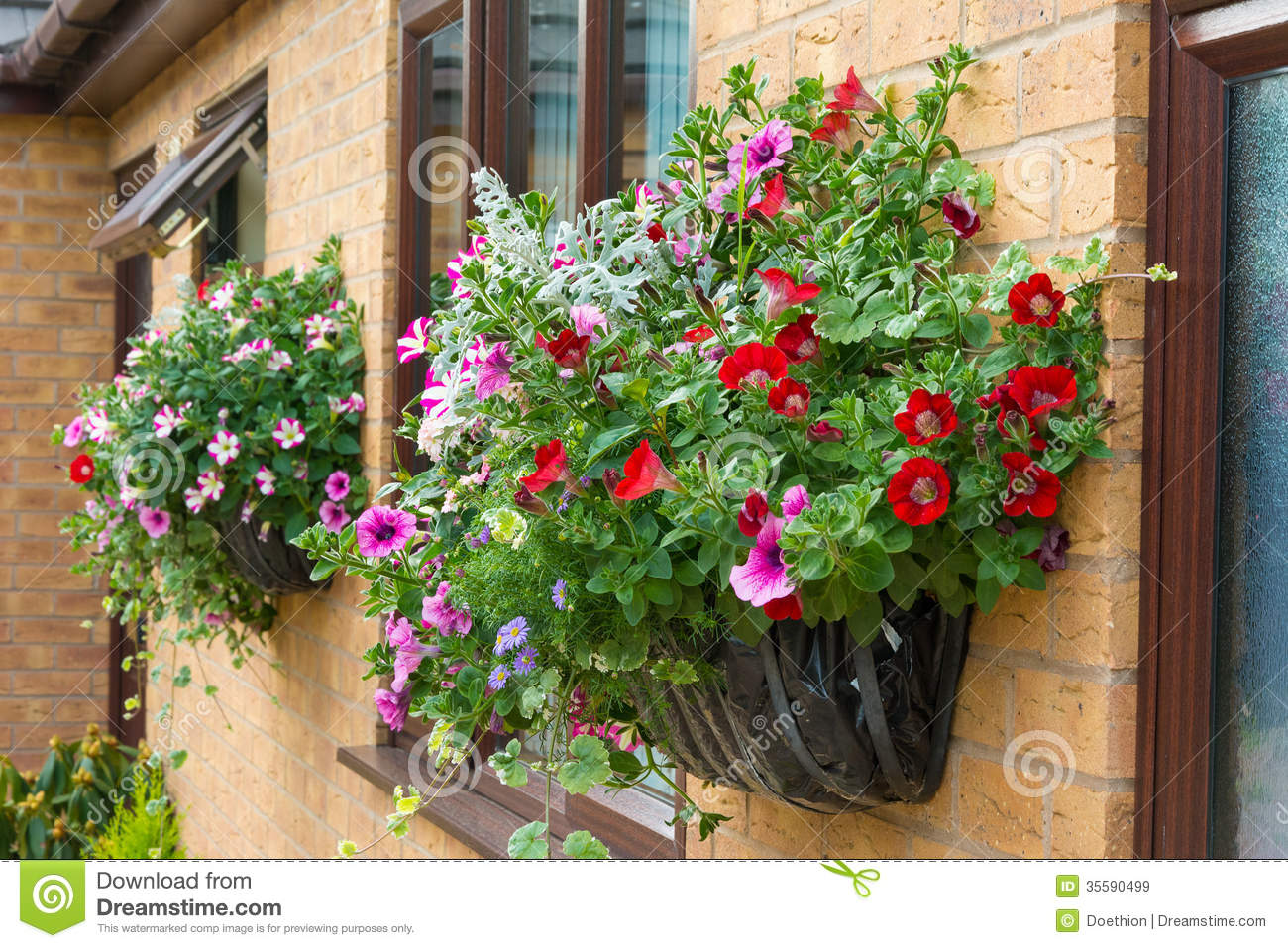 Summer Bedding Flowers In A Wall Mounted Basket Stock