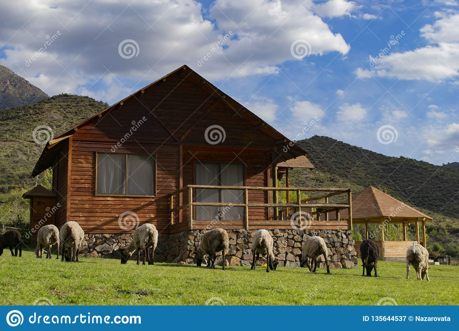 Sheep graze in front of a wooden house