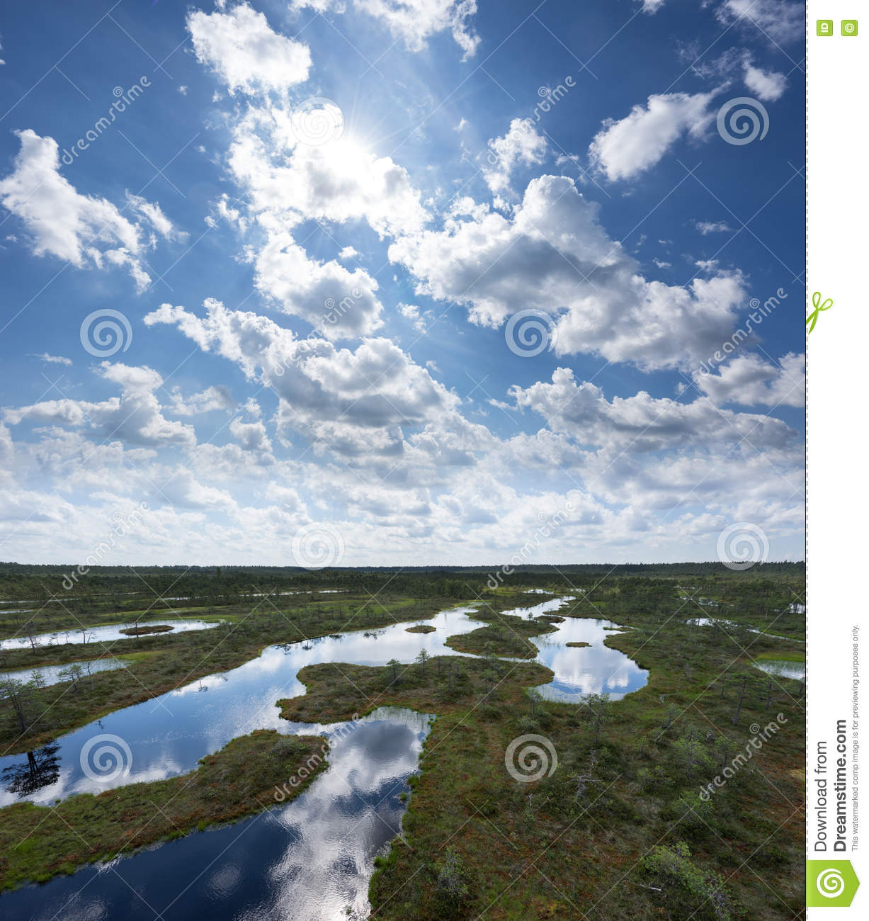 Summer in the bog. Trees, clouds and sky reflection in the swamp lake. Forest and marsh. Eevening in moor.