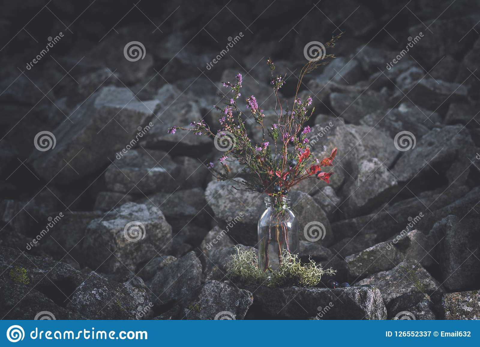 Summer Bouquet Of Wild Blueberries And Blossom Heather Stock Image Image Of Branch Fresh 126552337
