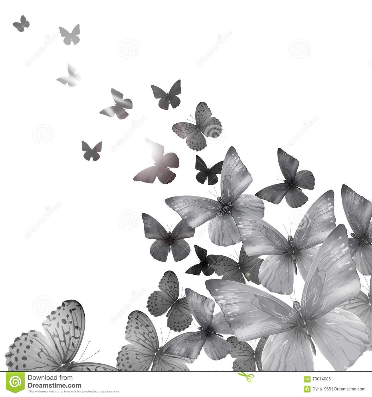 Summer Butterfly Black-white Stock Vector - Image: 70014085