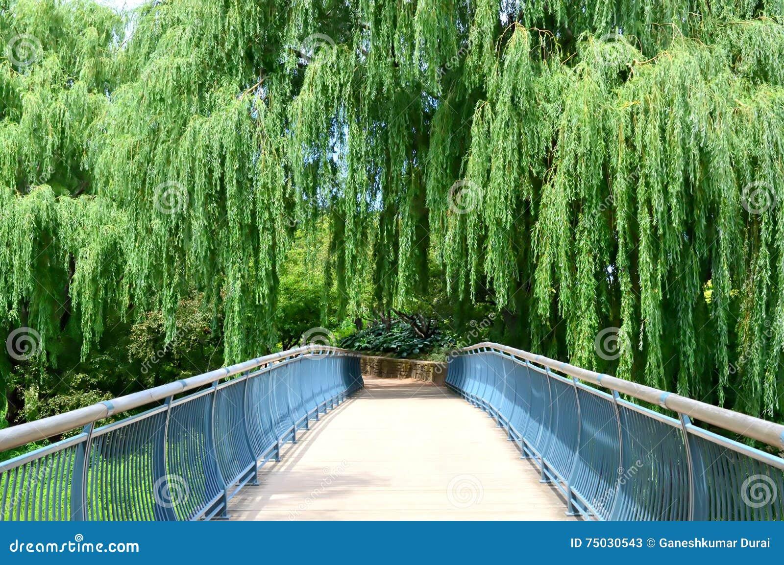 Summer at Chicago Botanic Garden
