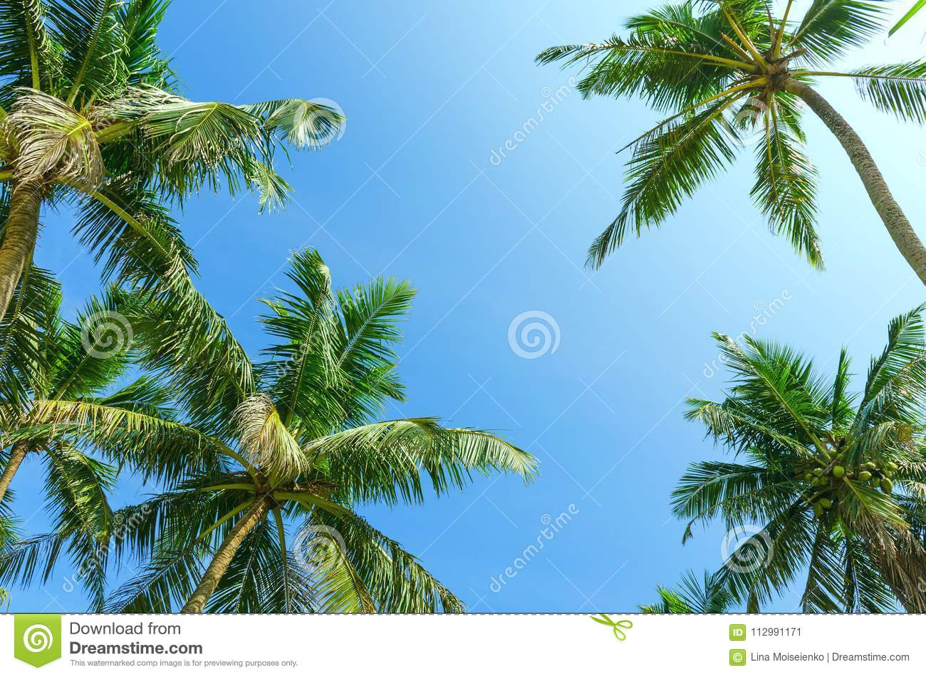 Summer clear blue sky with tropical coconut palm trees.