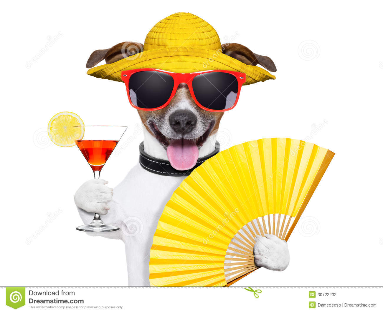 Download Summer cocktail dog stock photo. Image of holiday, heat - 30722232