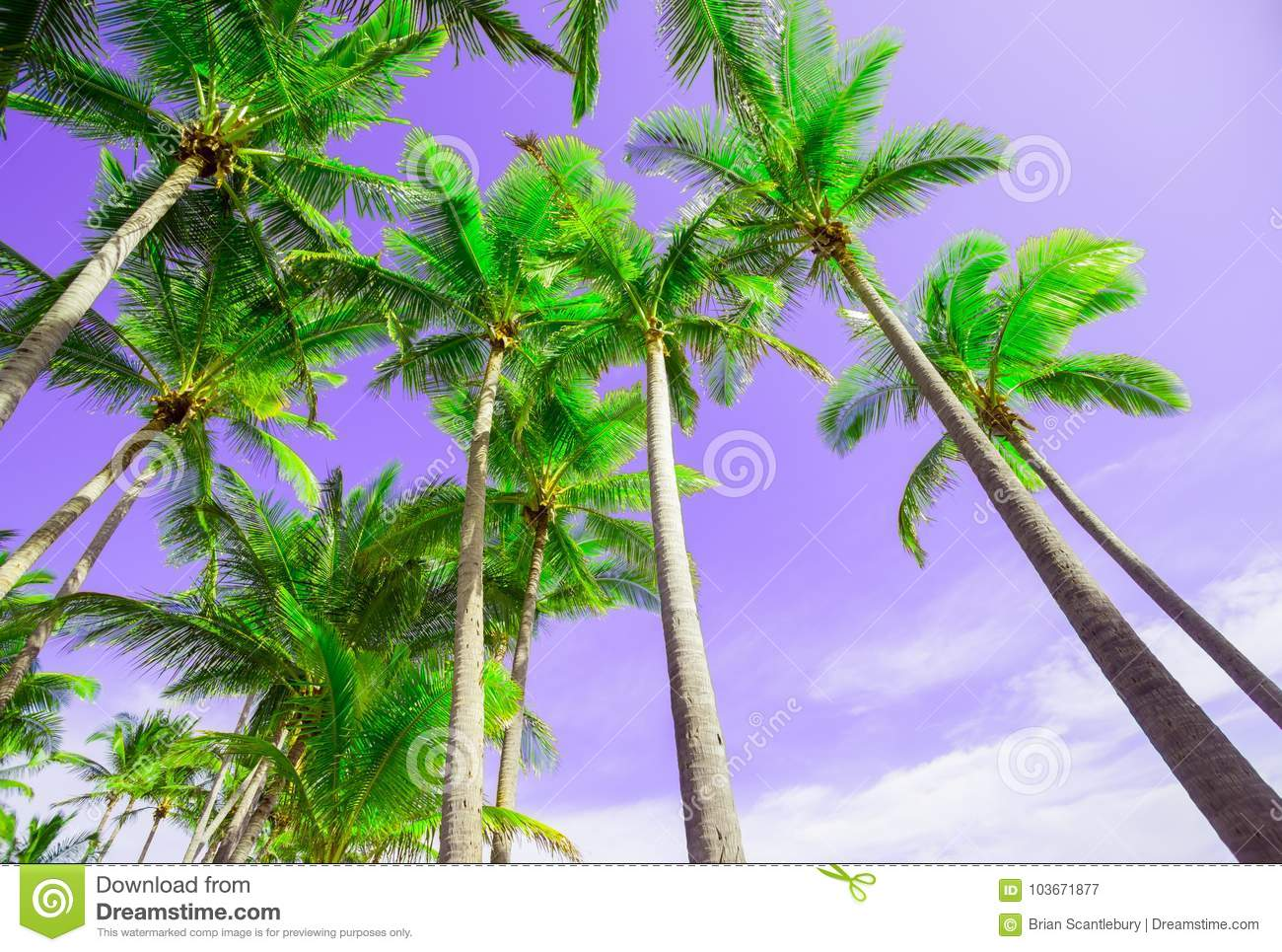 Summer Colors Palm Trees Image. Stock Image - Image of flora ...
