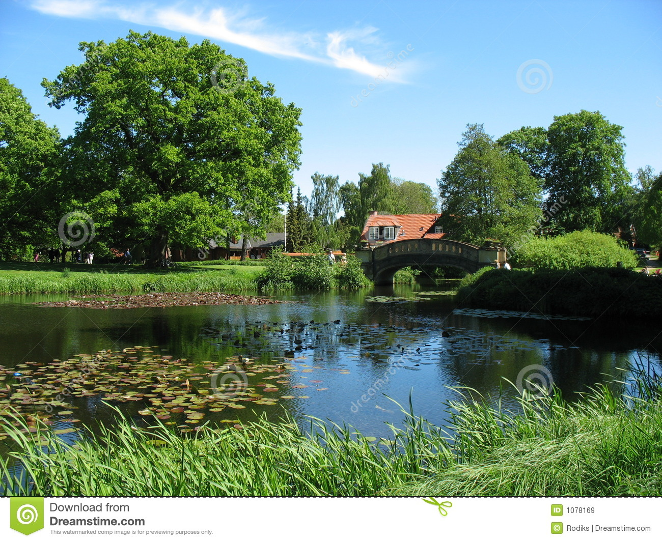 Summer country landscape with pond royalty free stock for Pond landscape