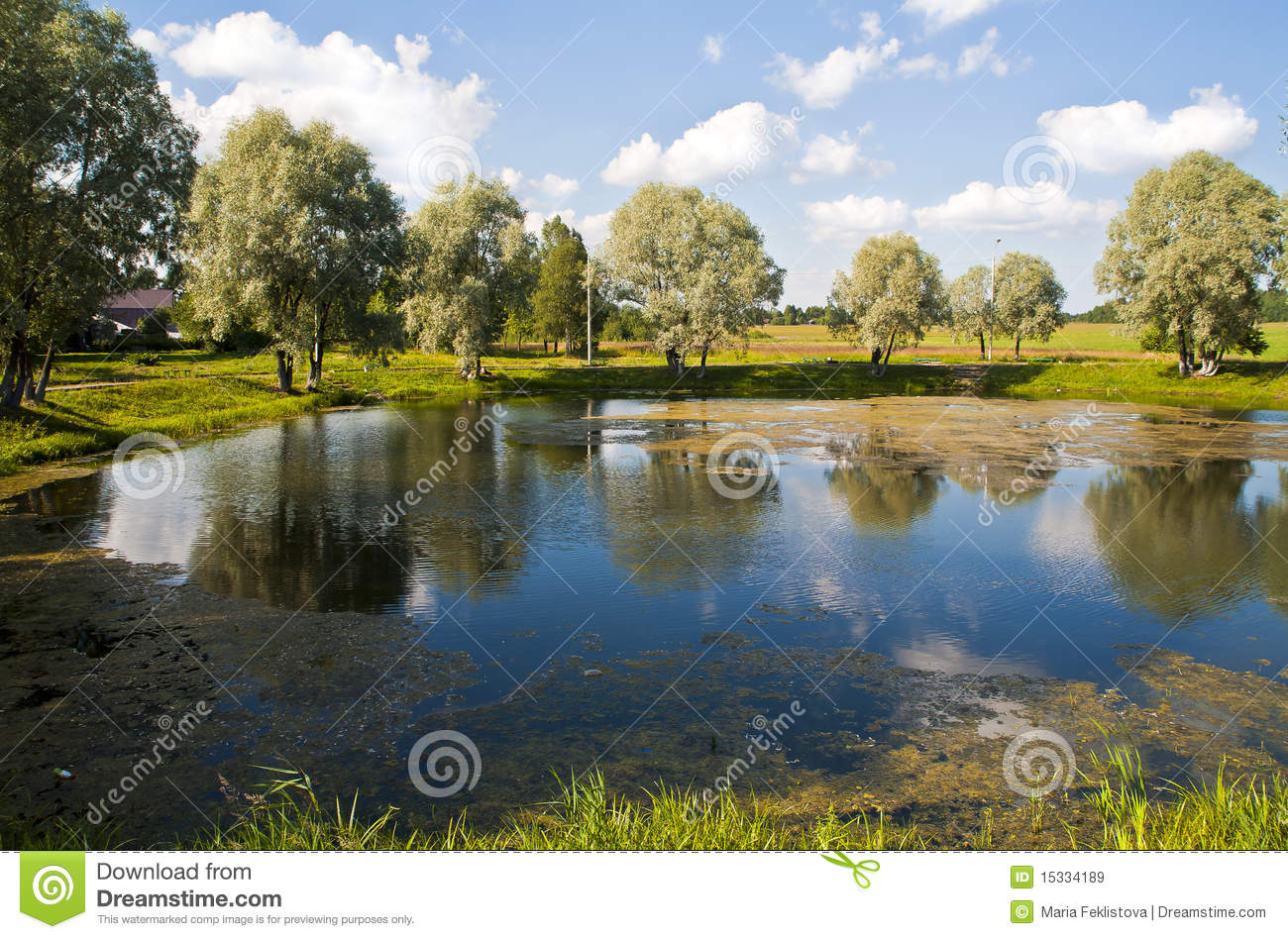 Summer country landscape with pond.
