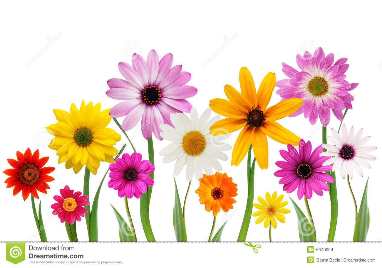 summer daisies stock images   image 5340004