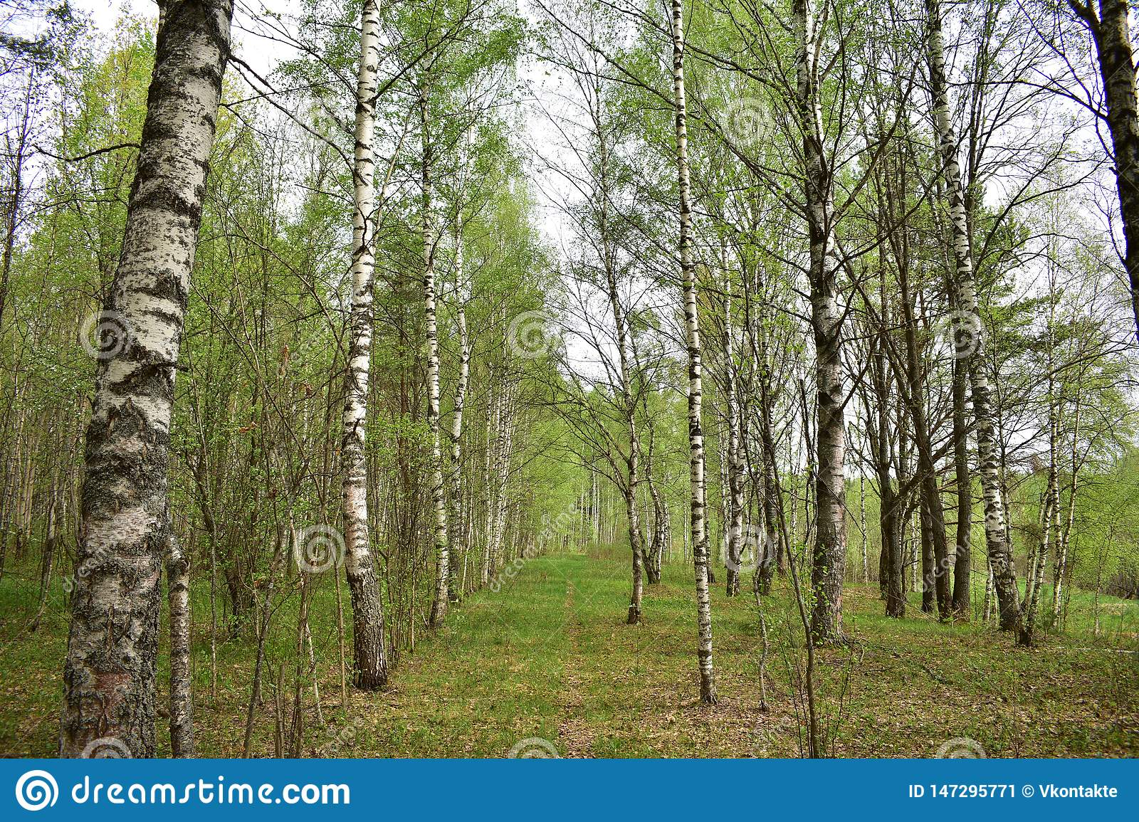 Summer day in the forest is very beautiful neatly arranged on the branches of green leaves