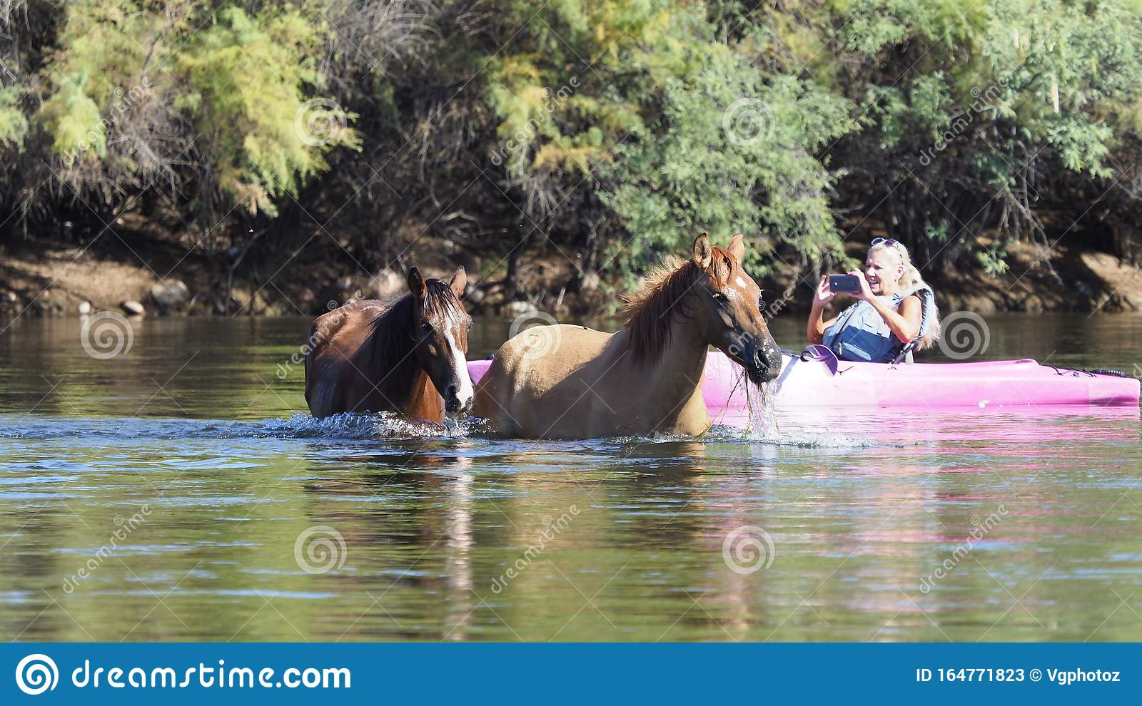 A Wild River Ride Stock Image Image Of Summer Horses 164771823