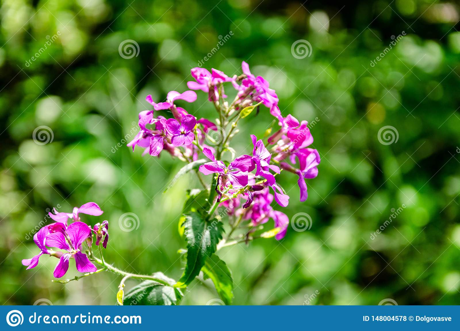 Summer delicate blooming pink flowers