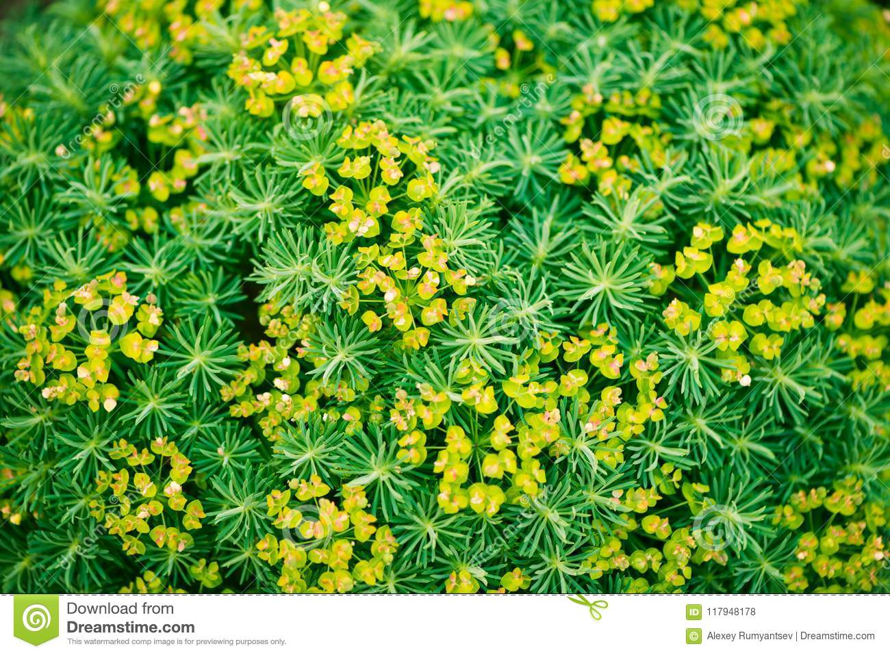 Summertime Floral Green Background Plants Stock Photo