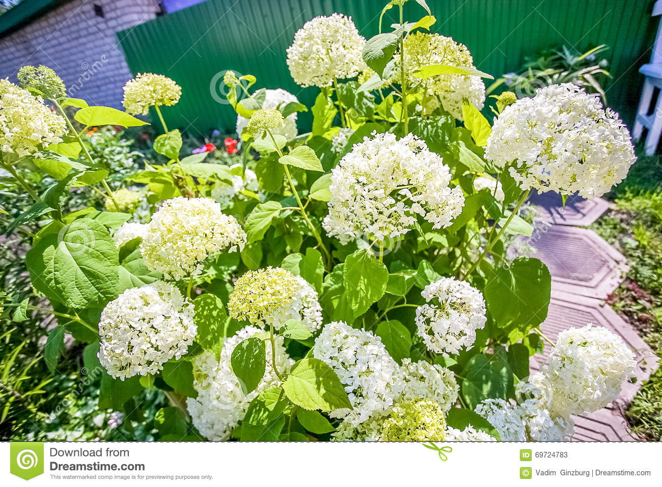Summer Flower Bed In A Garden With White Flowers Stock Image Image