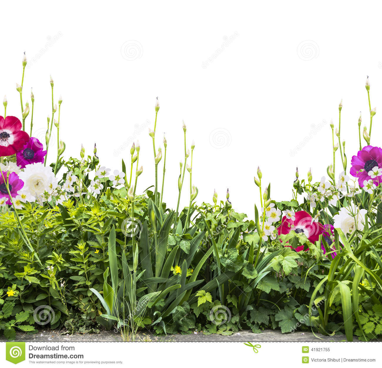 Summer Flower Bed With Iris And Anemones,siolated Stock