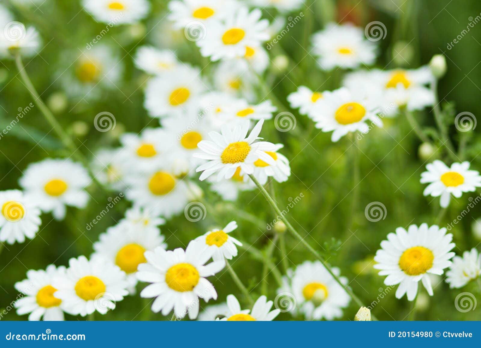 Summer flowers stock photo image of spring flora garden 20154980 summer flowers mightylinksfo