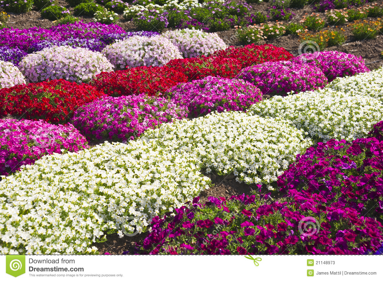 Summer Flowers stock image. Image of pink, vibrant, colorful