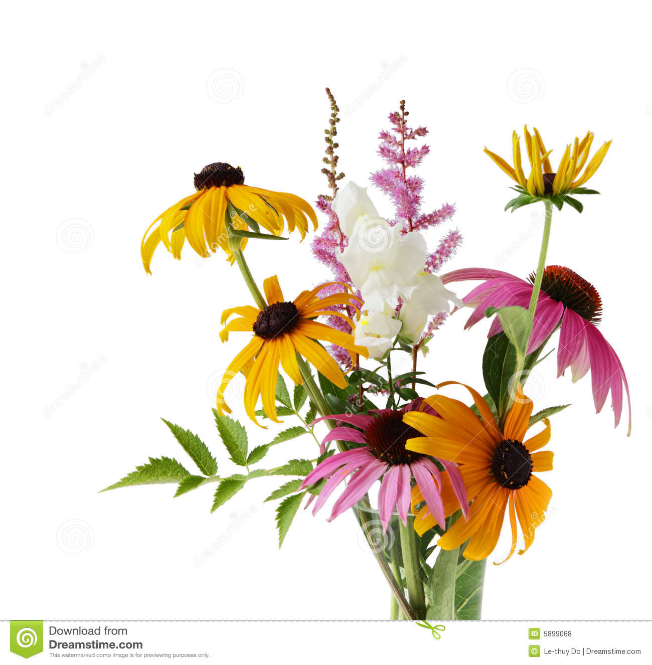 Spirea and daisy royalty free stock image cartoondealer for Flowers union square nyc