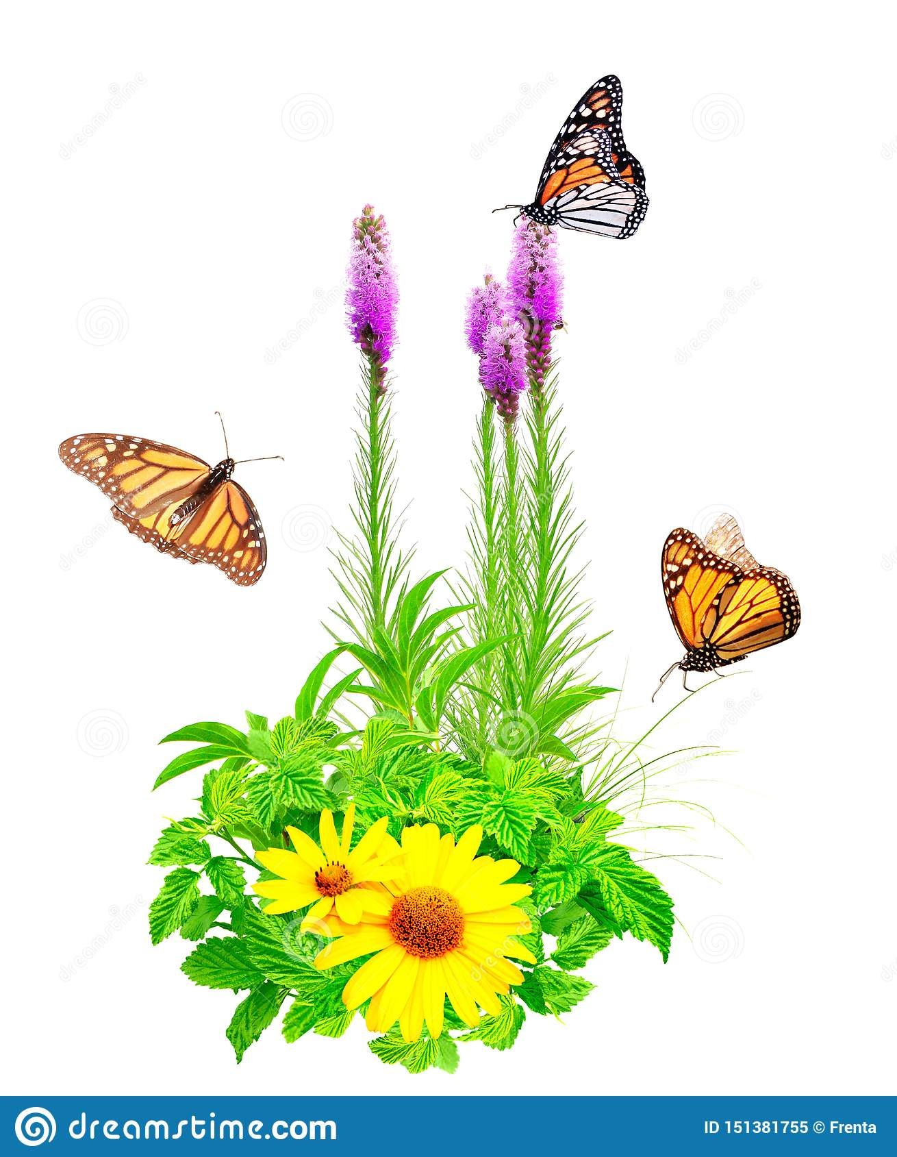 Summer flowers, green leaves and monarch butterflies