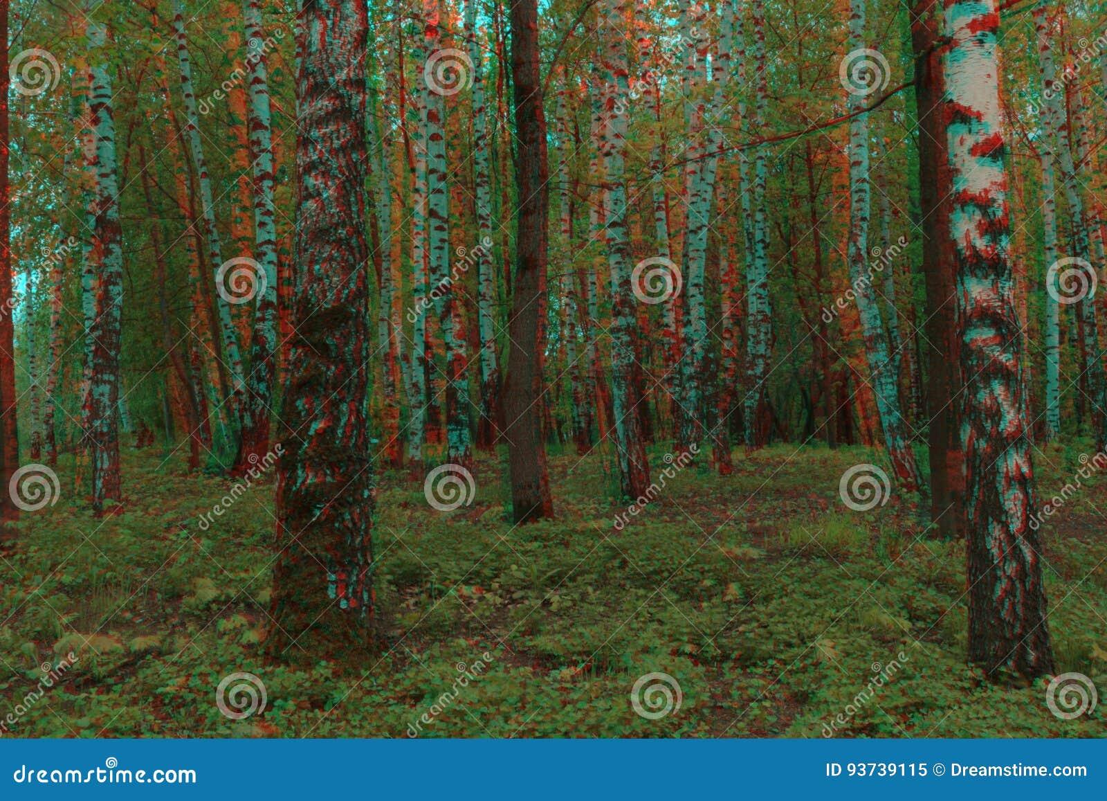 Summer forest anaglyph