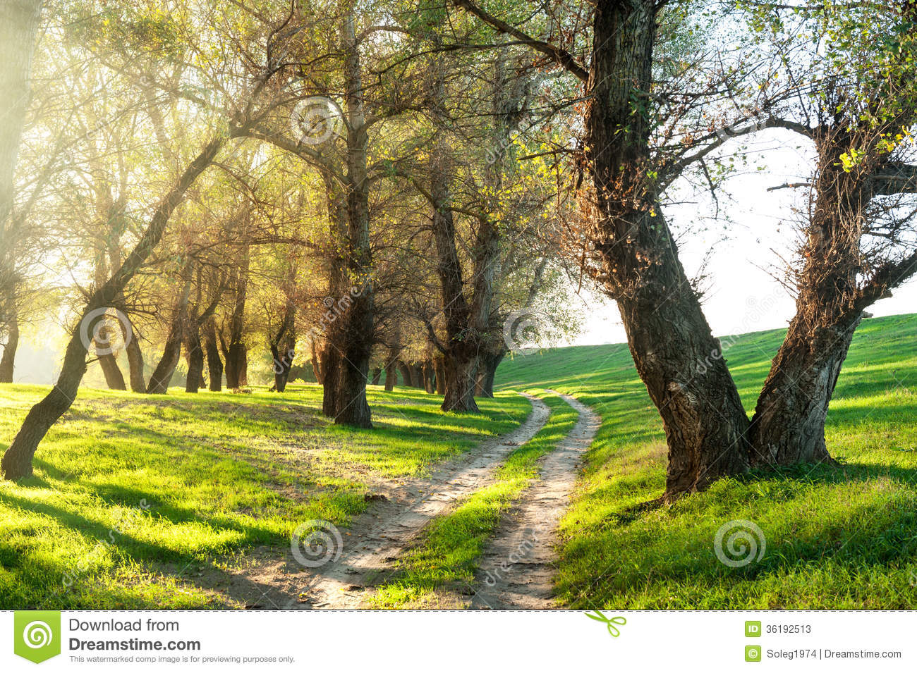 Download Summer Forest With Sun And Dirt Road Stock Image - Image of glade, beautiful: 36192513