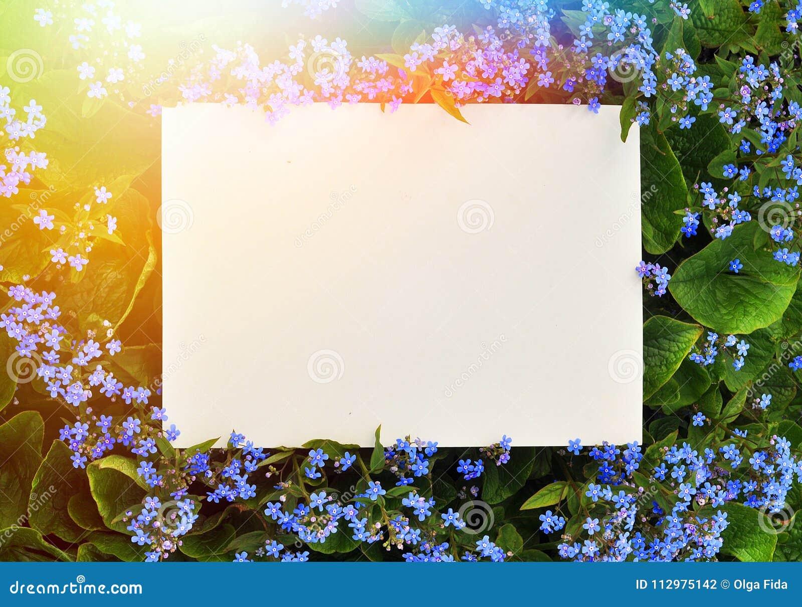 Summer frame of flowers
