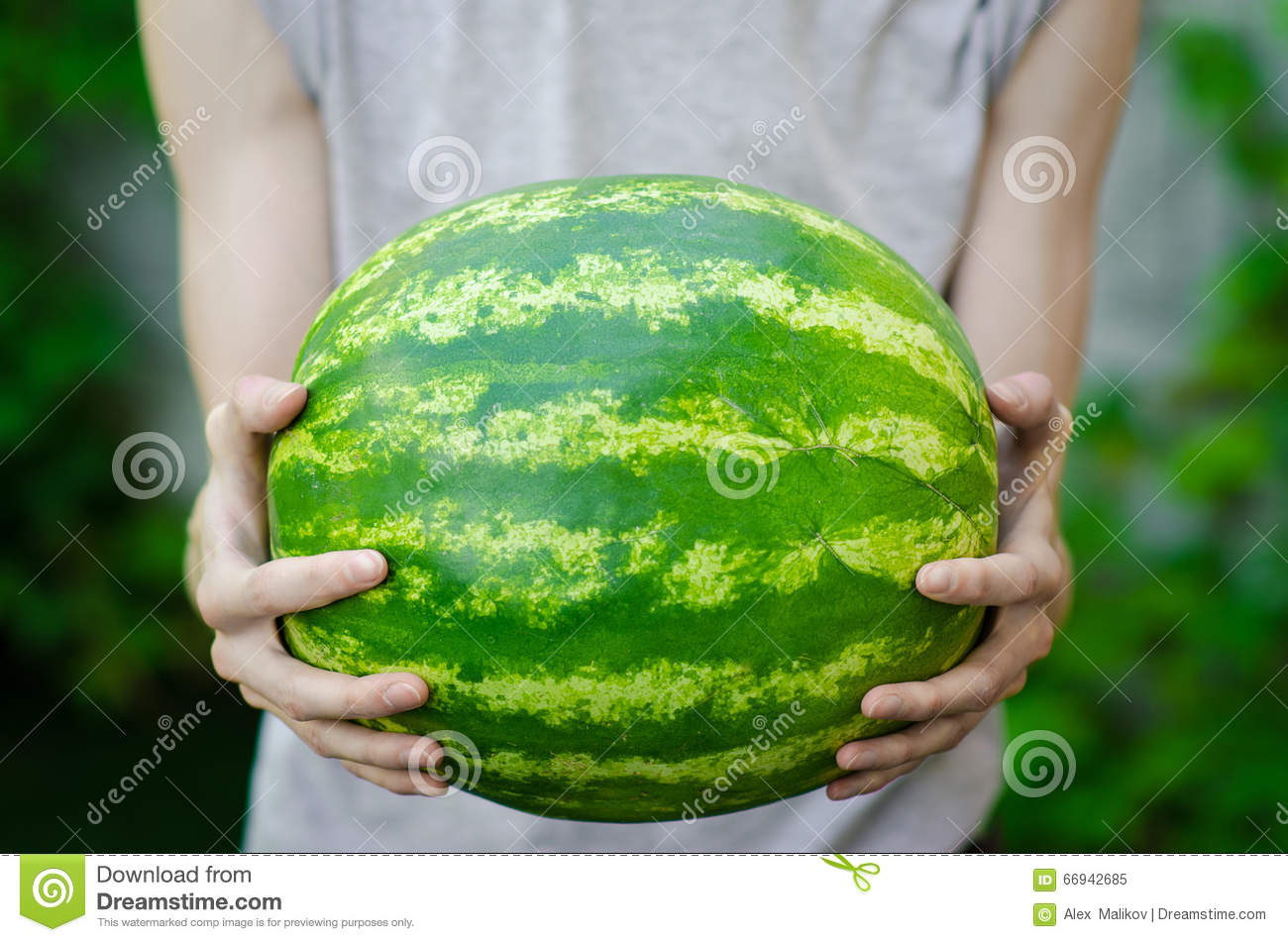 Summer and fresh watermelon theme: a man holds a watermelon on the green background